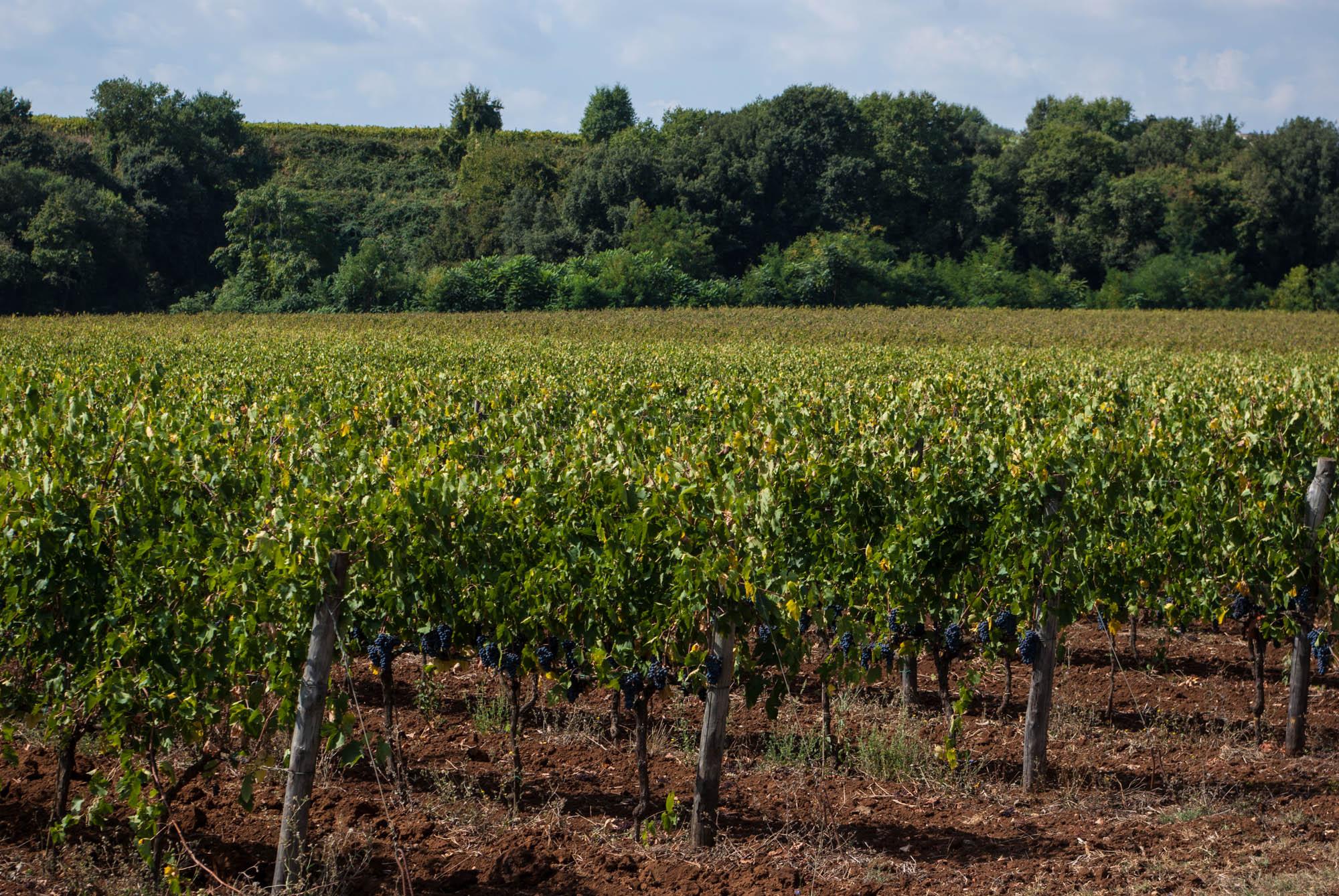 Strada del vino dell'olio e dei sapori Cori